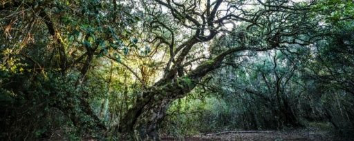 krige trees